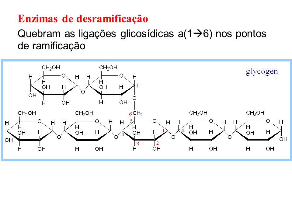 Enzimas de desramificação Quebram as ligações glicosídicas a(1 6) nos pontos de ramificação