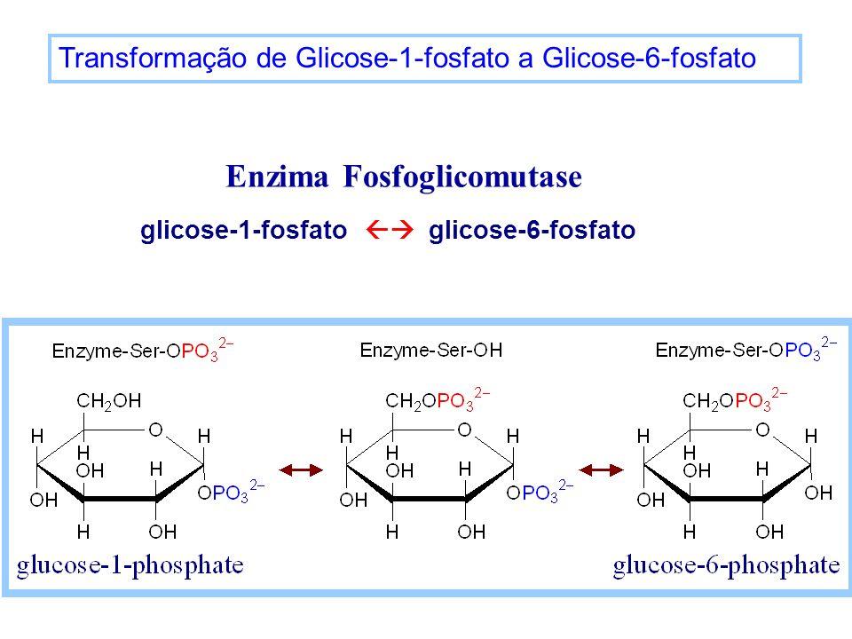 Transformação de Glicose-1-fosfato a Glicose-6-fosfato Enzima Fosfoglicomutase glicose-1-fosfato glicose-6-fosfato