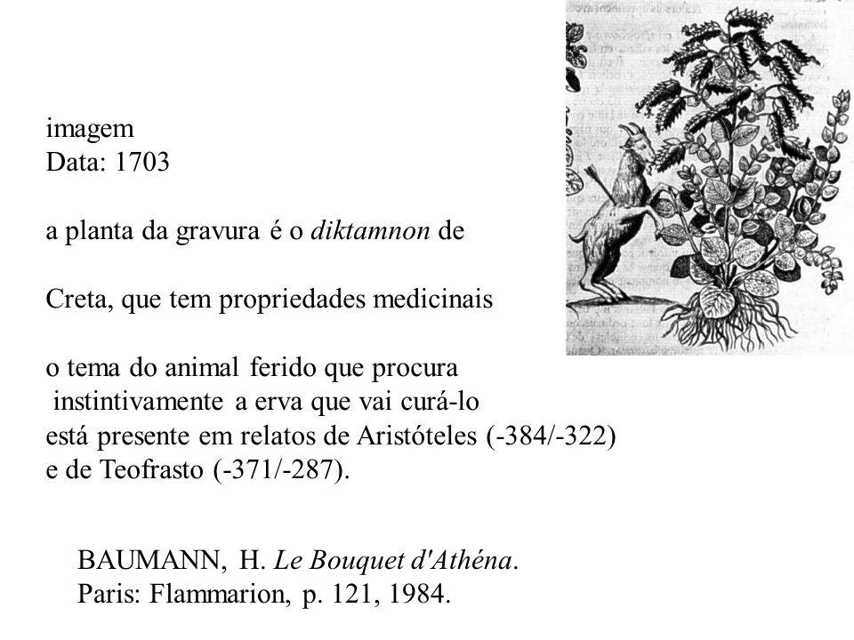 BAUMANN, H. Le Bouquet d'Athéna. Paris: Flammarion, p. 121, 1984. imagem Data: 1703 a planta da gravura é o diktamnon de Creta, que tem propriedades m