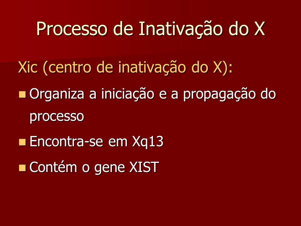 Processo de Inativação do X Xic (centro de inativação do X): Organiza a iniciação e a propagação do processo Organiza a iniciação e a propagação do pr