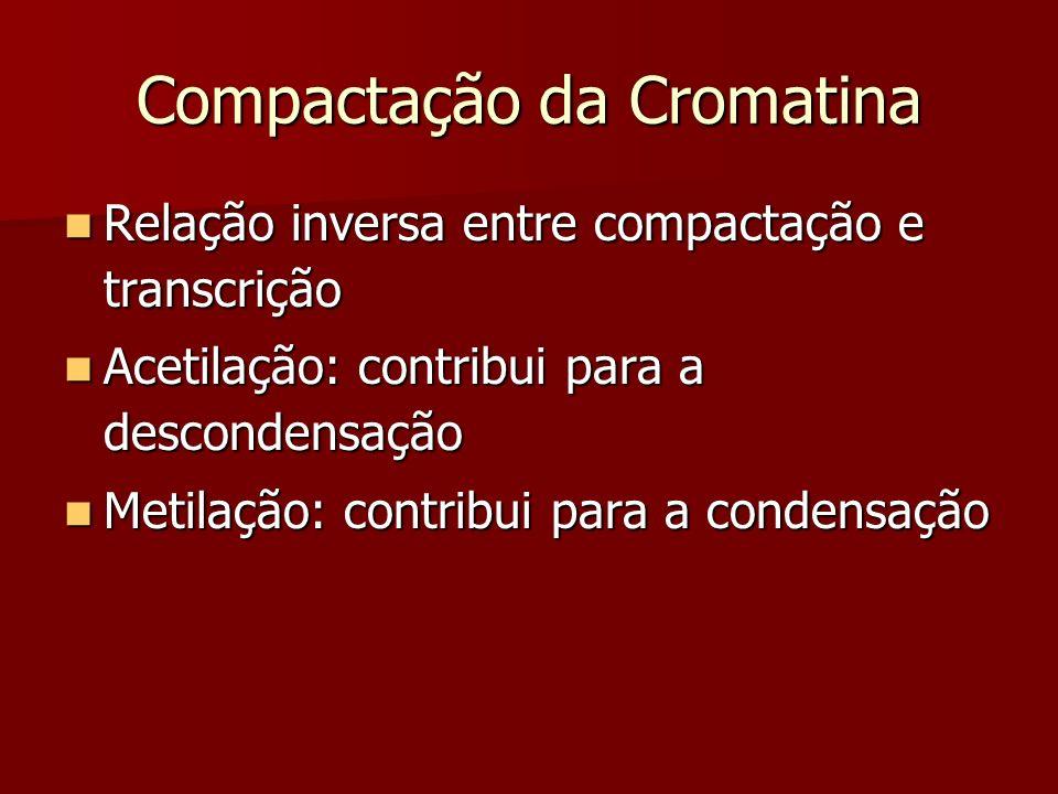 Compactação da Cromatina Relação inversa entre compactação e transcrição Relação inversa entre compactação e transcrição Acetilação: contribui para a