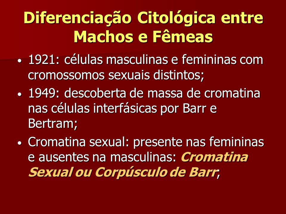 Diferenciação Citológica entre Machos e Fêmeas 1921: células masculinas e femininas com cromossomos sexuais distintos; 1921: células masculinas e femi