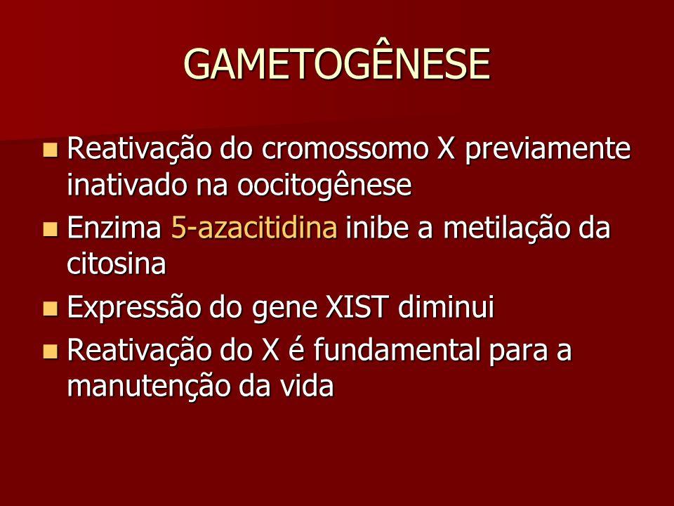 GAMETOGÊNESE Reativação do cromossomo X previamente inativado na oocitogênese Reativação do cromossomo X previamente inativado na oocitogênese Enzima