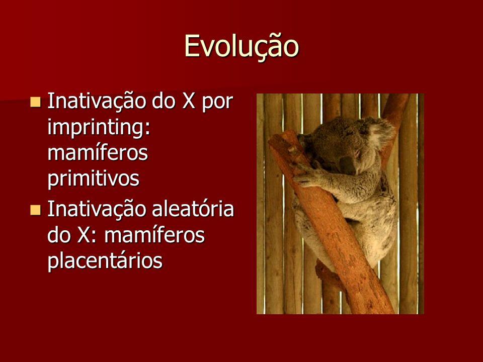 Evolução Inativação do X por imprinting: mamíferos primitivos Inativação do X por imprinting: mamíferos primitivos Inativação aleatória do X: mamífero