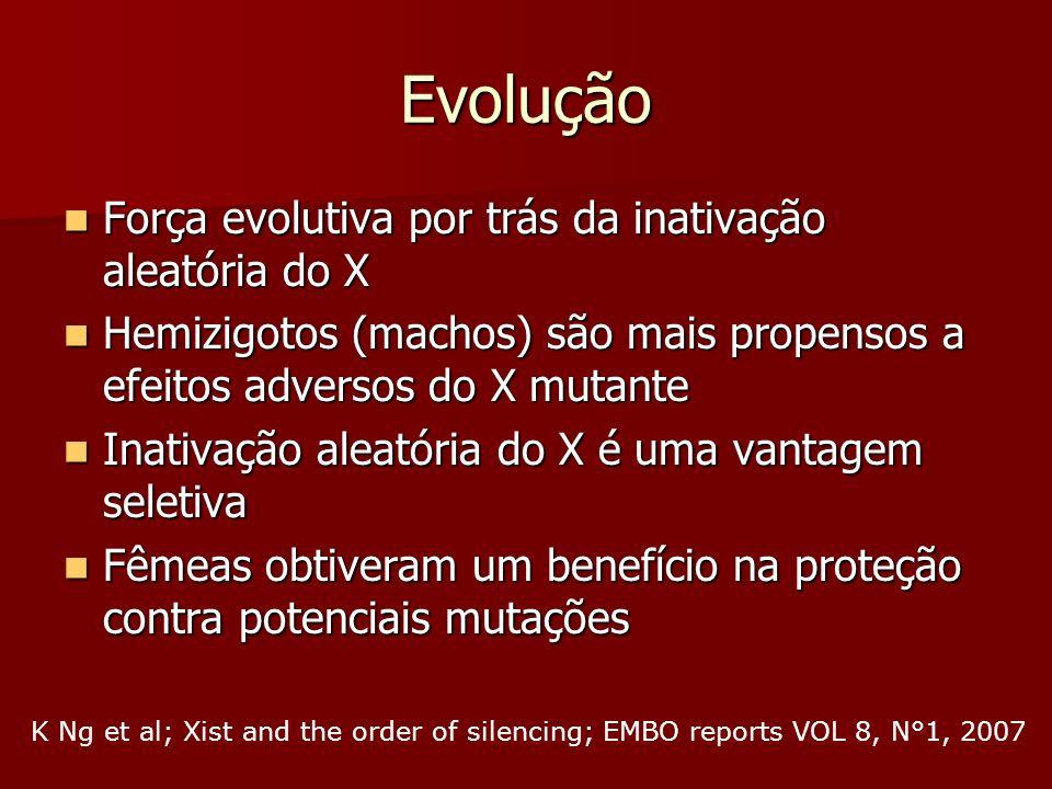 Evolução Força evolutiva por trás da inativação aleatória do X Força evolutiva por trás da inativação aleatória do X Hemizigotos (machos) são mais pro