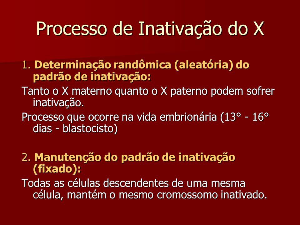 Processo de Inativação do X 1. Determinação randômica (aleatória) do padrão de inativação: Tanto o X materno quanto o X paterno podem sofrer inativaçã