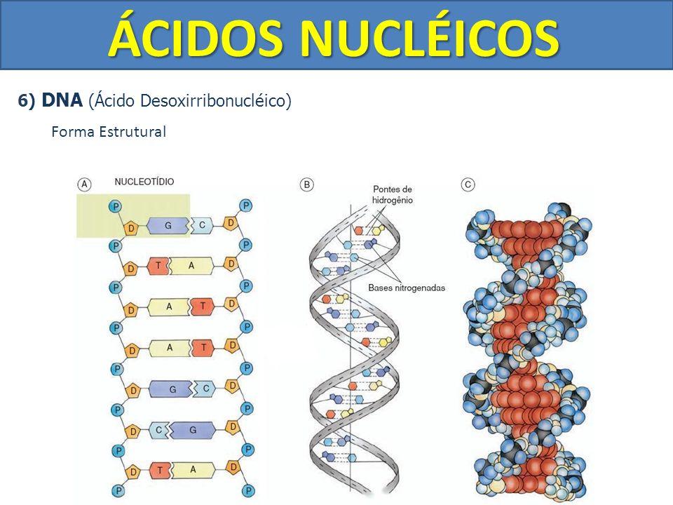 ÁCIDOS NUCLÉICOS 6) DNA (Ácido Desoxirribonucléico) Forma Estrutural