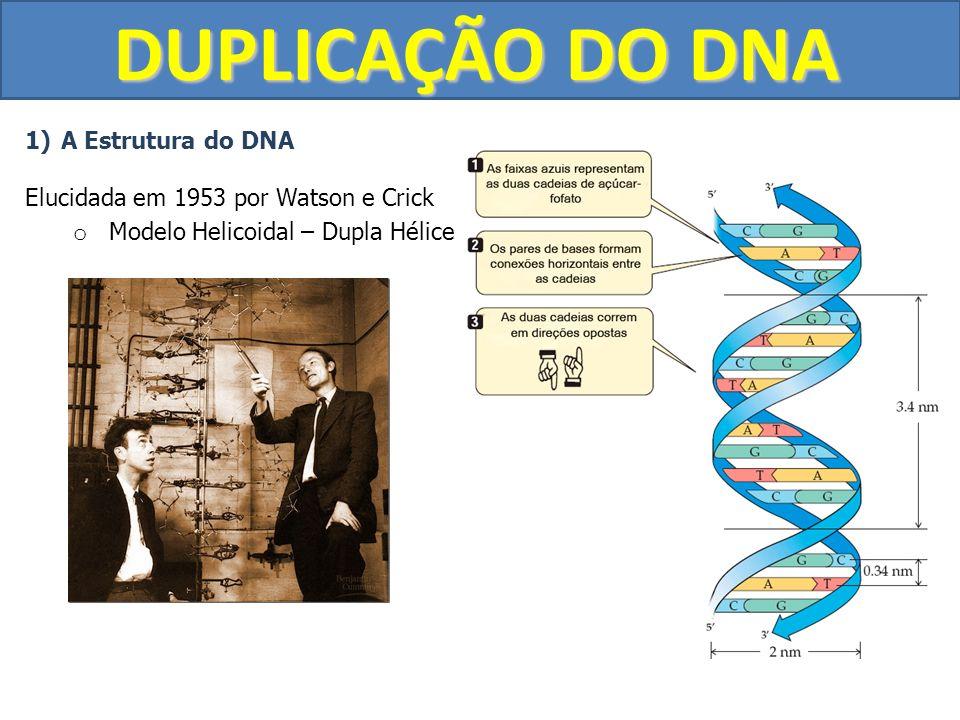 DUPLICAÇÃO DO DNA 1)A Estrutura do DNA Elucidada em 1953 por Watson e Crick o Modelo Helicoidal – Dupla Hélice