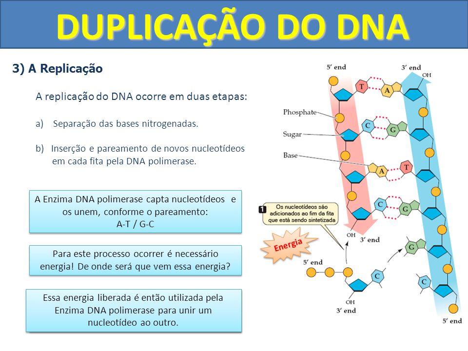 DUPLICAÇÃO DO DNA 3) A Replicação A replicação do DNA ocorre em duas etapas: a)Separação das bases nitrogenadas. b) Inserção e pareamento de novos nuc