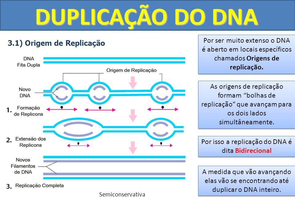 DUPLICAÇÃO DO DNA 3.1) Origem de Replicação Por ser muito extenso o DNA é aberto em locais específicos chamados Origens de replicação. As origens de r