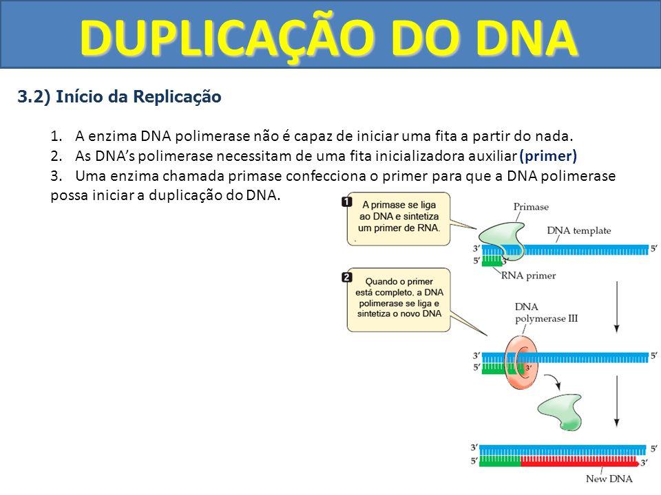 DUPLICAÇÃO DO DNA 3.2) Início da Replicação 1.A enzima DNA polimerase não é capaz de iniciar uma fita a partir do nada. 2.As DNAs polimerase necessita