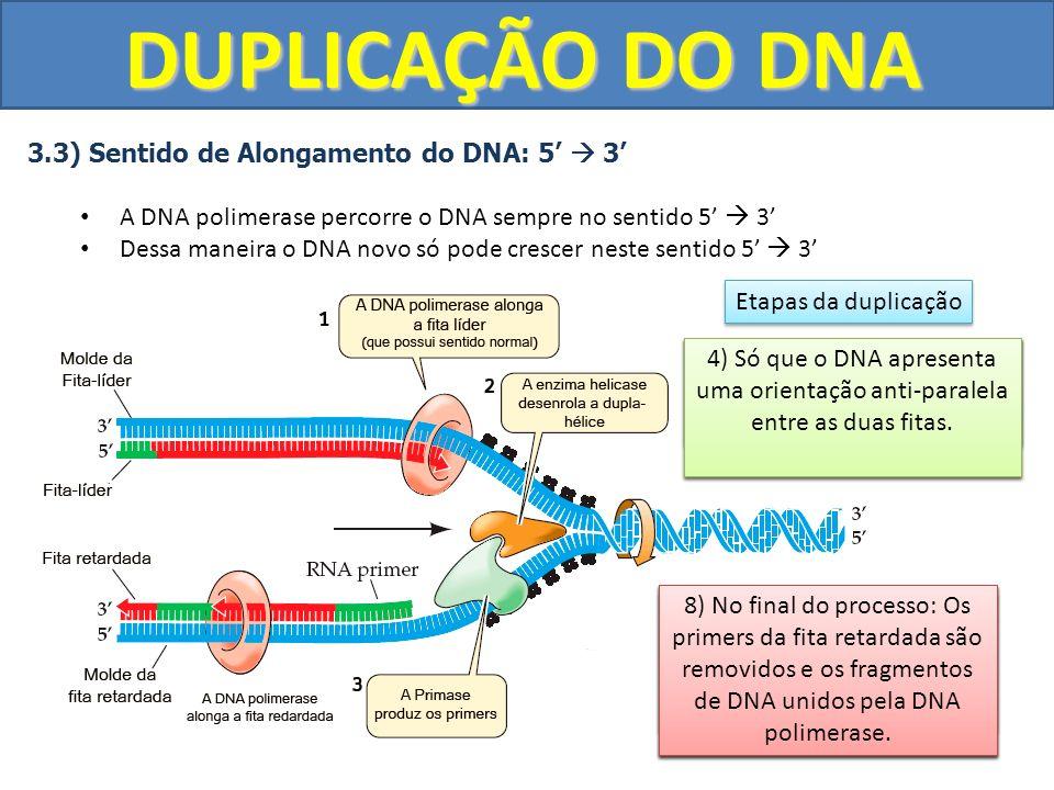 DUPLICAÇÃO DO DNA 3.3) Sentido de Alongamento do DNA: 5 3 A DNA polimerase percorre o DNA sempre no sentido 5 3 Dessa maneira o DNA novo só pode cresc