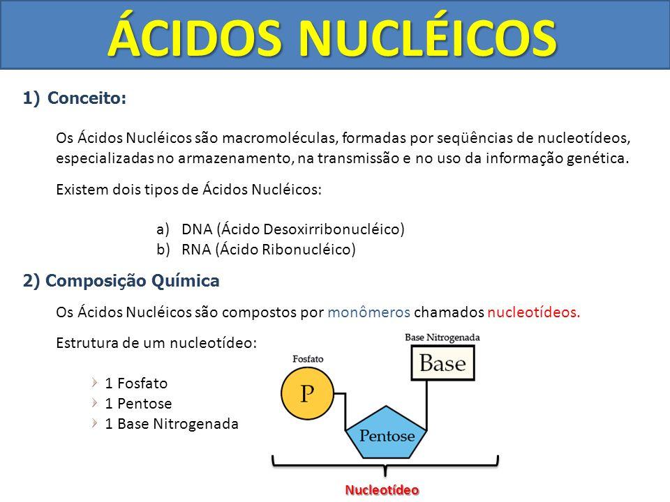 ÁCIDOS NUCLÉICOS 1)Conceito: Os Ácidos Nucléicos são macromoléculas, formadas por seqüências de nucleotídeos, especializadas no armazenamento, na tran