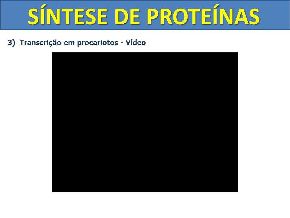 SÍNTESE DE PROTEÍNAS 3) Transcrição em procariotos - Vídeo