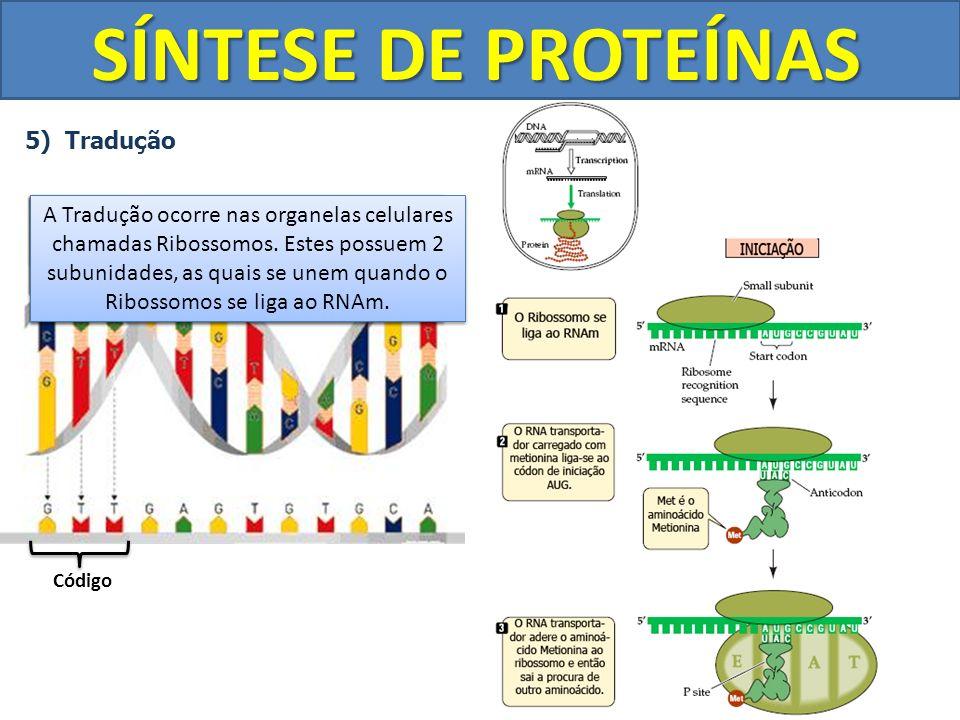 SÍNTESE DE PROTEÍNAS 5) Tradução Cada 3 Bases (triplet) do gene do DNA recebe o nome de Código. Código Os códigos do Gene do DNA são transcrito em CÓD