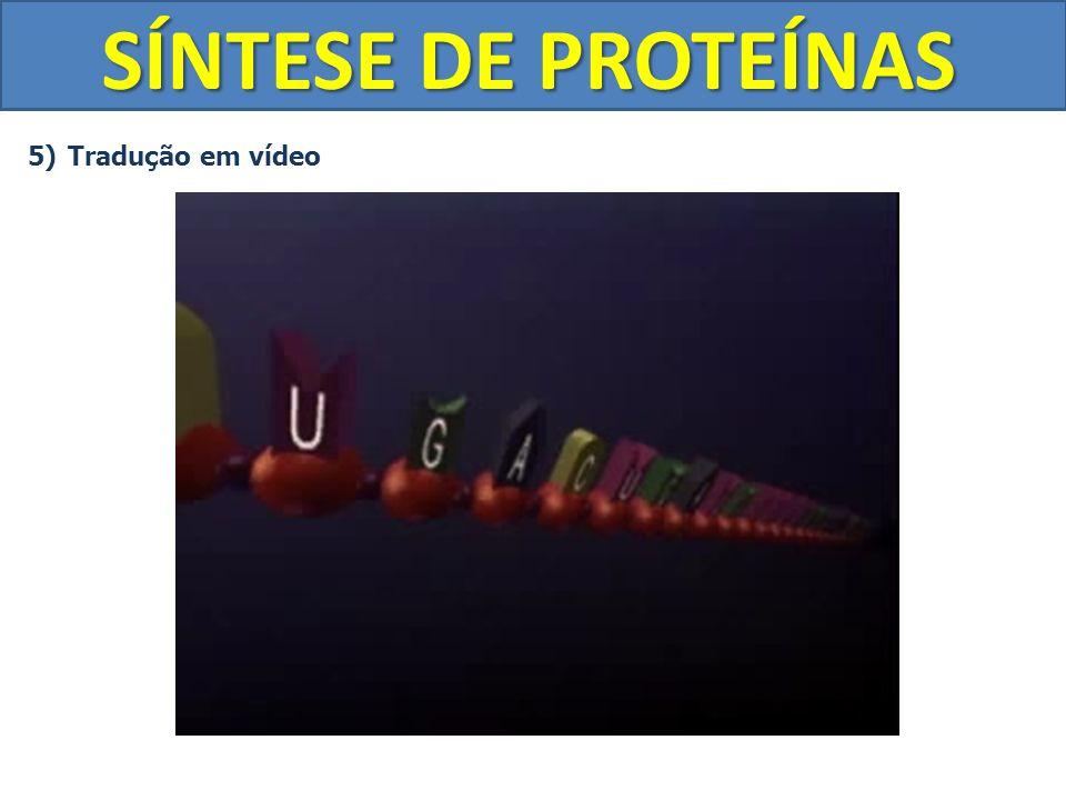 SÍNTESE DE PROTEÍNAS 5)Tradução em vídeo