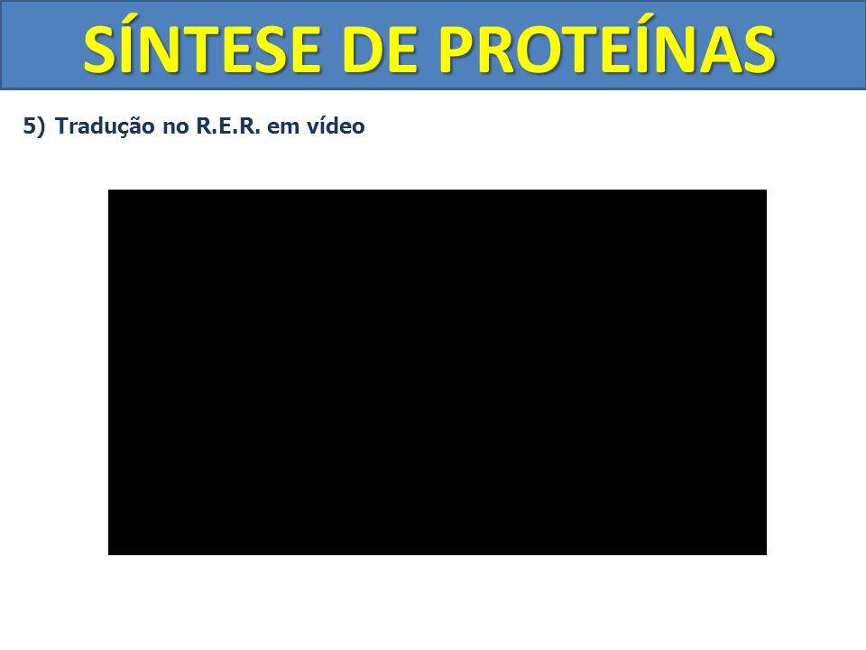 SÍNTESE DE PROTEÍNAS 5)Tradução no R.E.R. em vídeo