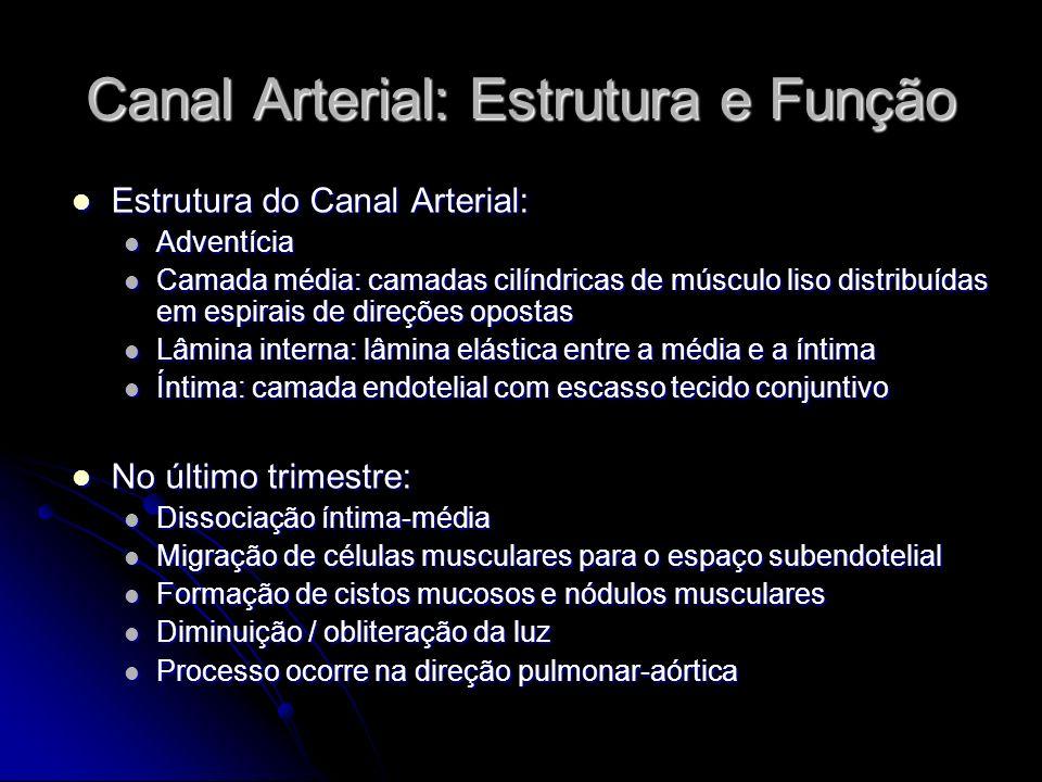 Fechamento do Canal Arterial O fechamento do canal arterial ocorre em duas etapas: O fechamento do canal arterial ocorre em duas etapas: Constrição funcional após o nascimento Constrição funcional após o nascimento Fechamento anatômico (descrito anteriormente) Fechamento anatômico (descrito anteriormente) Constrição funcional em neonatos a termo: Constrição funcional em neonatos a termo: 20% até 24h 20% até 24h 82% até 48h 82% até 48h 100% até 96h 100% até 96h Até que haja fechamento anatômico, a re-abertura é possível Até que haja fechamento anatômico, a re-abertura é possível