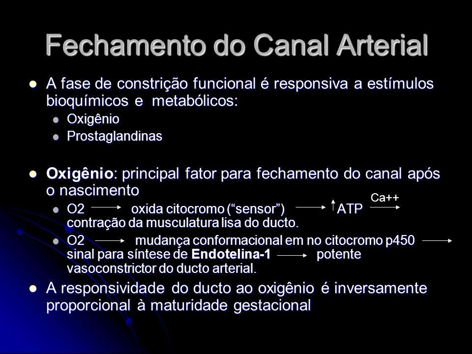 Fechamento do Canal Arterial A fase de constrição funcional é responsiva a estímulos bioquímicos e metabólicos: A fase de constrição funcional é respo