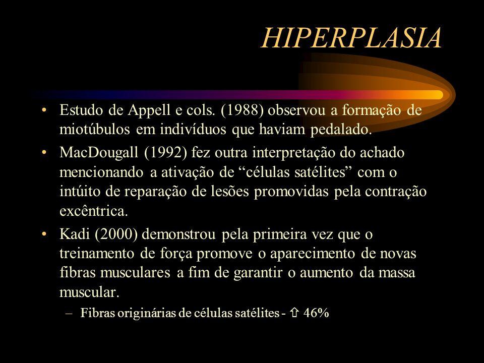 HIPERPLASIA Estudo de Appell e cols. (1988) observou a formação de miotúbulos em indivíduos que haviam pedalado. MacDougall (1992) fez outra interpret