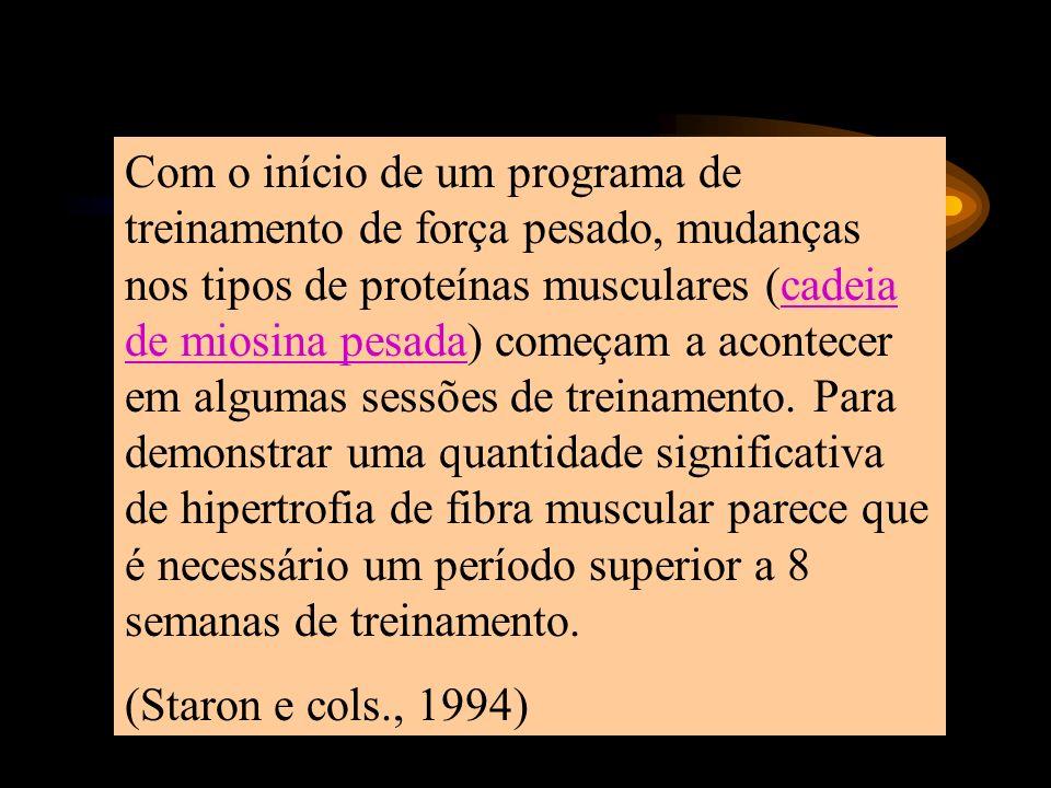 Com o início de um programa de treinamento de força pesado, mudanças nos tipos de proteínas musculares (cadeia de miosina pesada) começam a acontecer