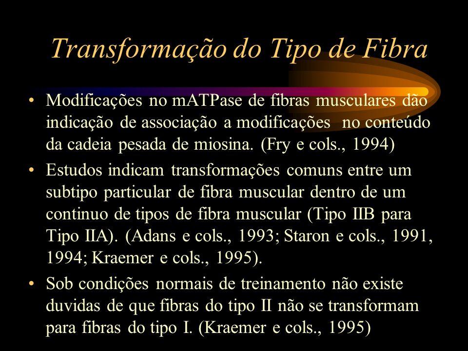 Transformação do Tipo de Fibra Modificações no mATPase de fibras musculares dão indicação de associação a modificações no conteúdo da cadeia pesada de