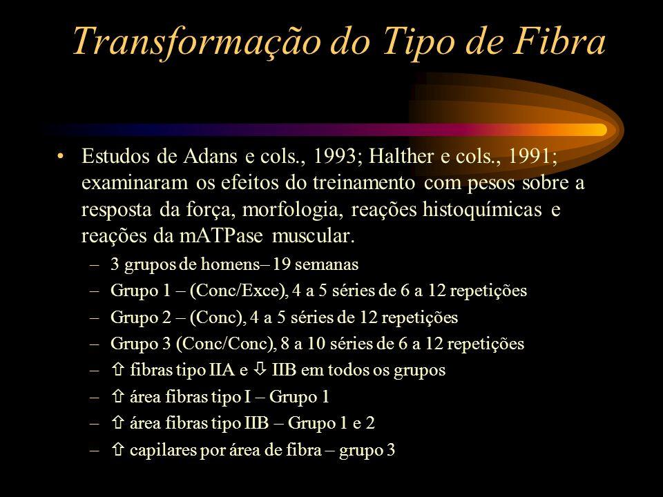 Transformação do Tipo de Fibra Estudos de Adans e cols., 1993; Halther e cols., 1991; examinaram os efeitos do treinamento com pesos sobre a resposta