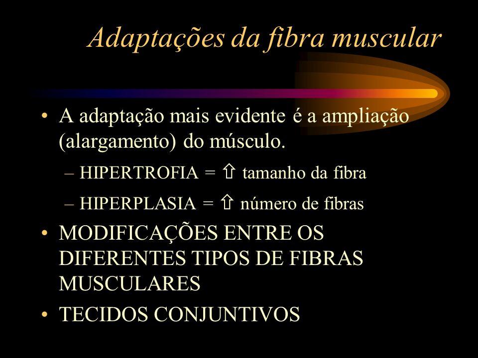 Adaptações da fibra muscular A adaptação mais evidente é a ampliação (alargamento) do músculo. –HIPERTROFIA = tamanho da fibra –HIPERPLASIA = número d