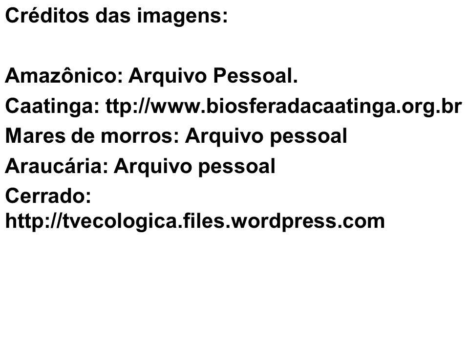Créditos das imagens: Amazônico: Arquivo Pessoal. Caatinga: ttp://www.biosferadacaatinga.org.br Mares de morros: Arquivo pessoal Araucária: Arquivo pe