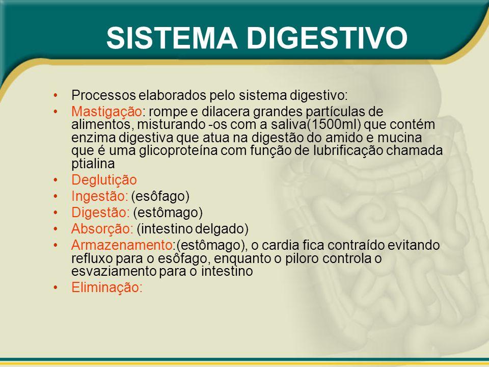 Processos elaborados pelo sistema digestivo: Mastigação: rompe e dilacera grandes partículas de alimentos, misturando -os com a saliva(1500ml) que con
