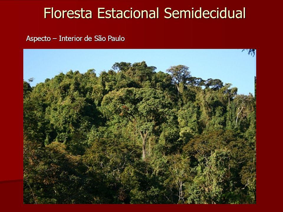 Floresta Estacional Semidecidual Aspecto – Interior de São Paulo
