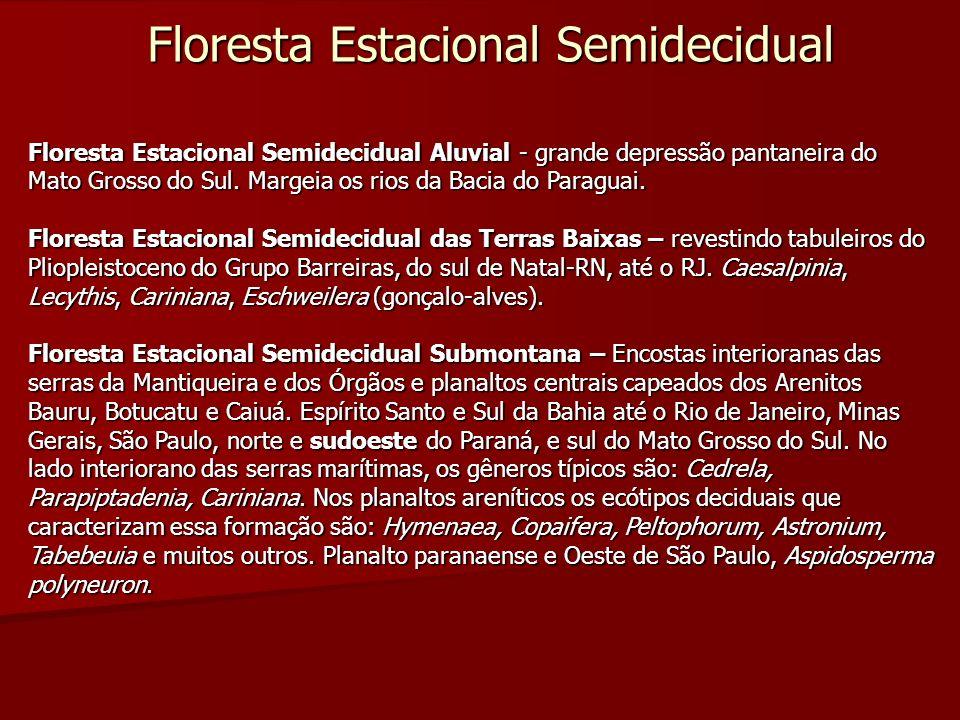 Floresta Estacional Semidecidual Floresta Estacional Semidecidual Aluvial - grande depressão pantaneira do Mato Grosso do Sul. Margeia os rios da Baci