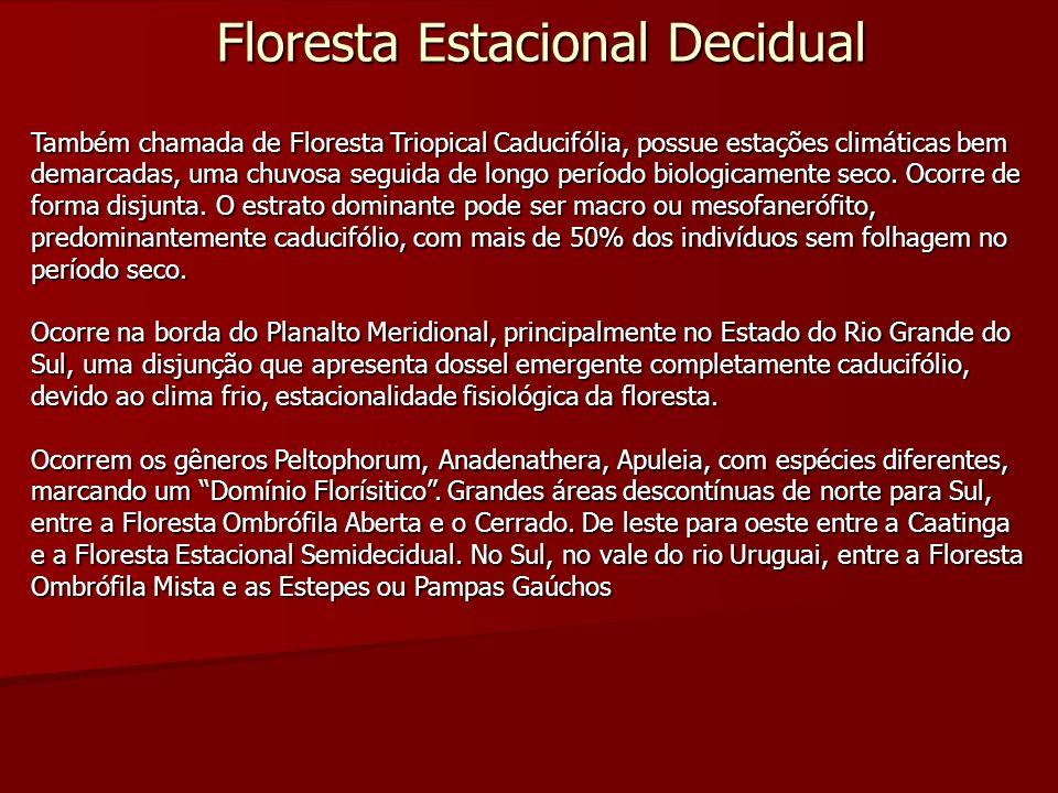 Floresta Estacional Decidual Também chamada de Floresta Triopical Caducifólia, possue estações climáticas bem demarcadas, uma chuvosa seguida de longo