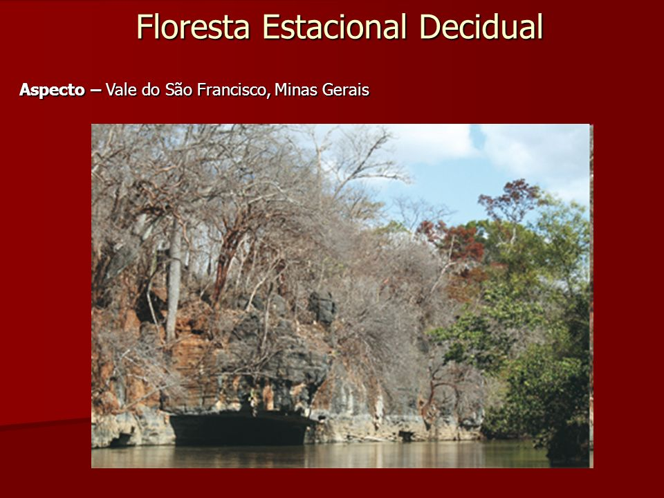 Floresta Estacional Decidual Aspecto – Vale do São Francisco, Minas Gerais