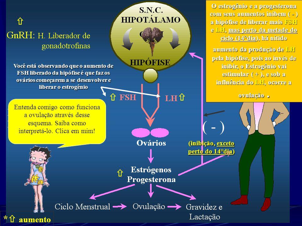 * aumento O estrogênio e a progesterona com seus aumentos inibem ( - ) a hipófise de liberar mais FSH e LH, mas perto da metade do ciclo (14°dia), há
