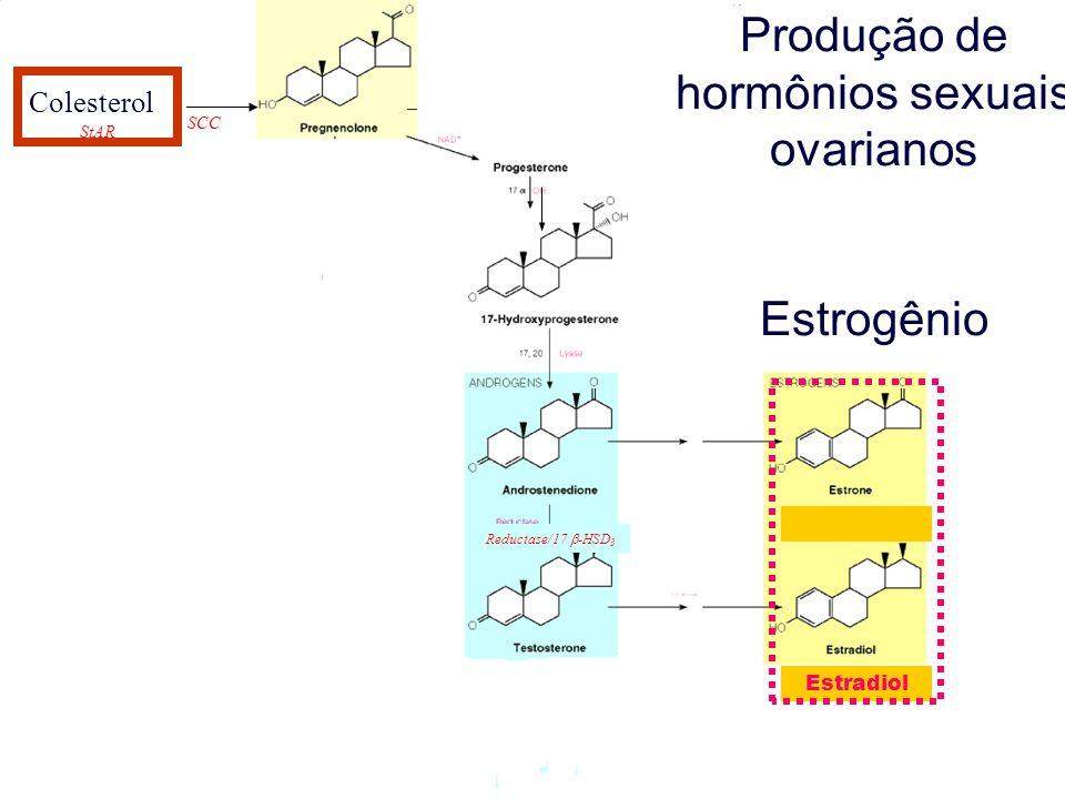 Colesterol StAR SCC Reductase/17 -HSD 3 Produção de hormônios sexuais ovarianos Estrogênio Colesterol Estradiol