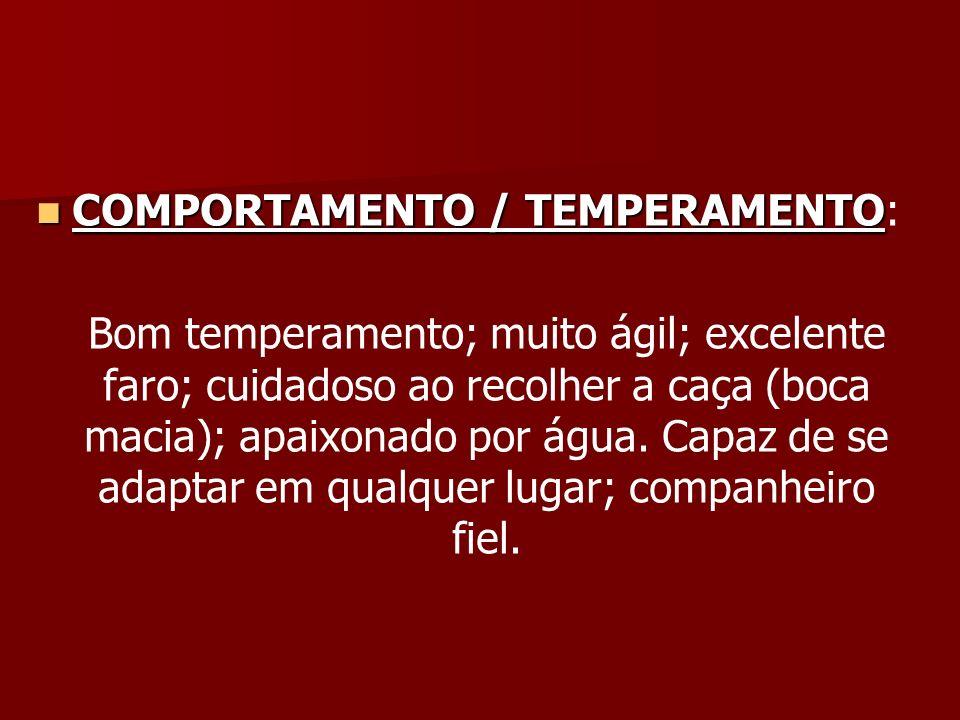 COMPORTAMENTO / TEMPERAMENTO COMPORTAMENTO / TEMPERAMENTO: Bom temperamento; muito ágil; excelente faro; cuidadoso ao recolher a caça (boca macia); ap
