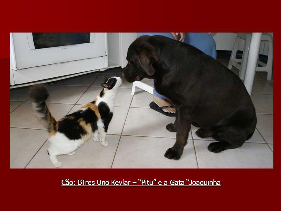 Cão: BTres Uno Kevlar – Pitu e a Gata Joaquinha