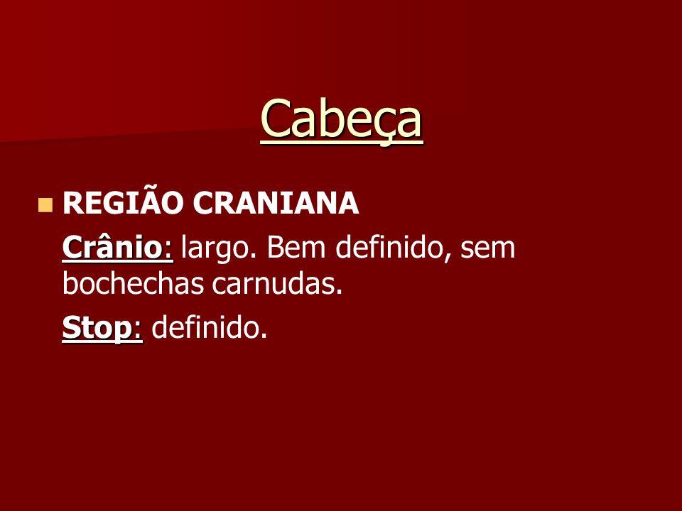 Cabeça REGIÃO CRANIANA Crânio: Crânio: largo. Bem definido, sem bochechas carnudas. Stop: Stop: definido.