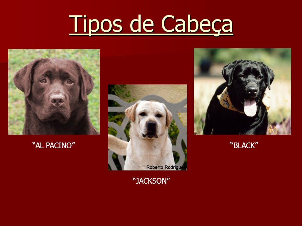 Tipos de Cabeça AL PACINO JACKSON BLACK