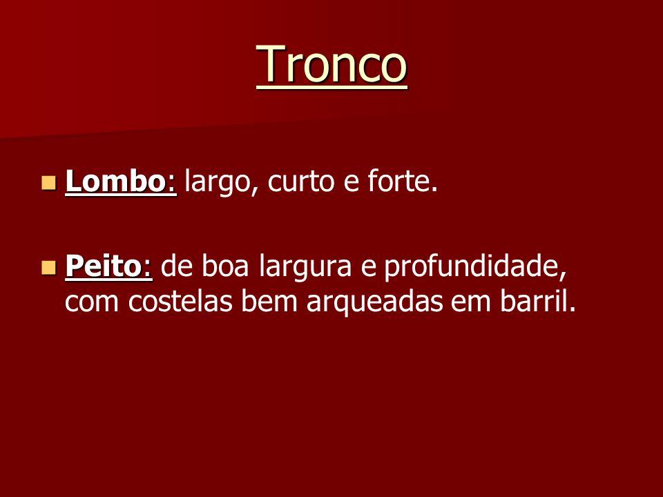 Tronco Lombo: Lombo: largo, curto e forte. Peito: Peito: de boa largura e profundidade, com costelas bem arqueadas em barril.