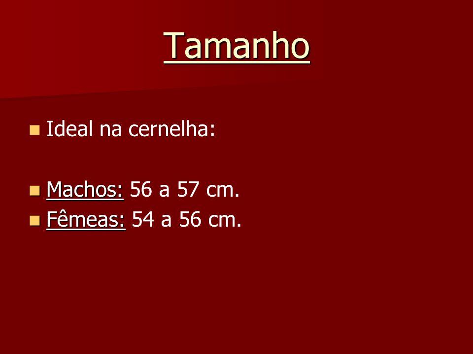 Tamanho Ideal na cernelha: Machos: Machos: 56 a 57 cm. Fêmeas: Fêmeas: 54 a 56 cm.