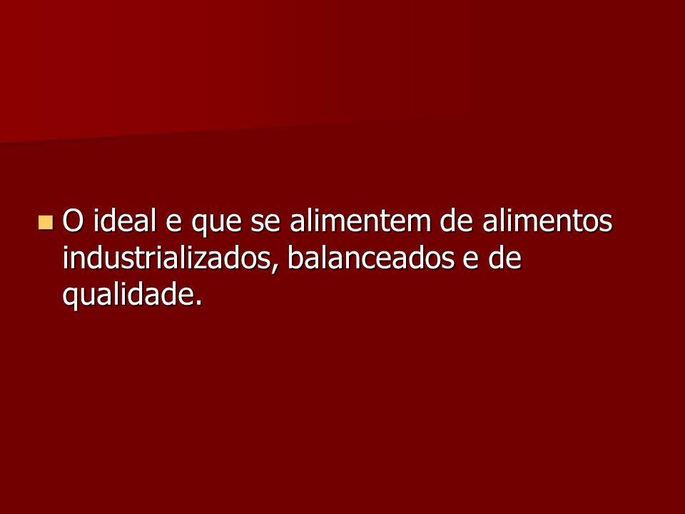 O ideal e que se alimentem de alimentos industrializados, balanceados e de qualidade. O ideal e que se alimentem de alimentos industrializados, balanc