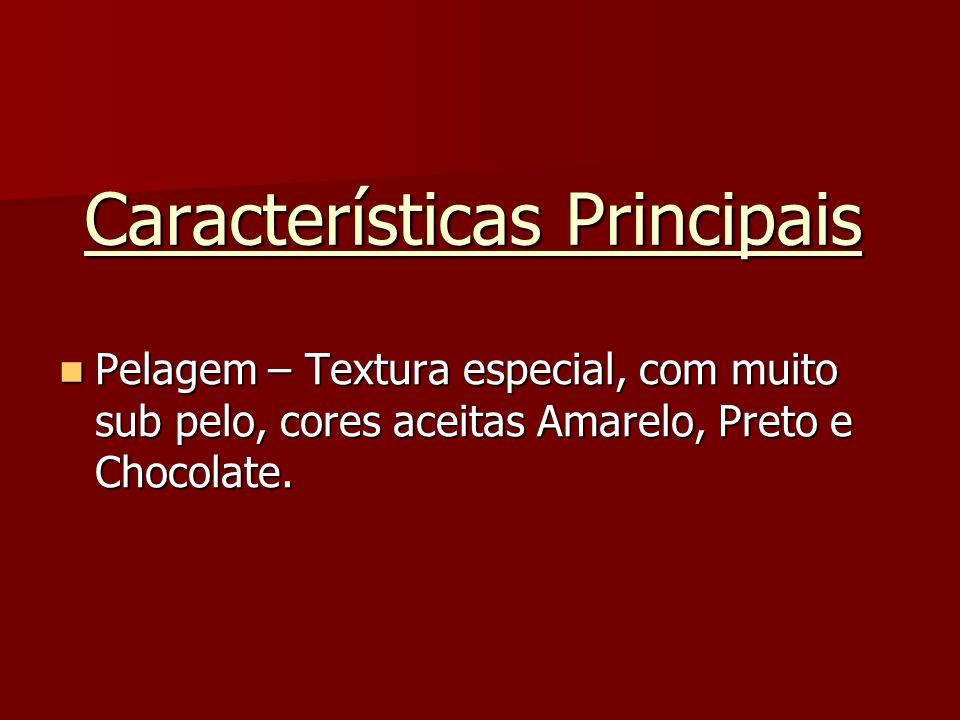 Características Principais Pelagem – Textura especial, com muito sub pelo, cores aceitas Amarelo, Preto e Chocolate. Pelagem – Textura especial, com m