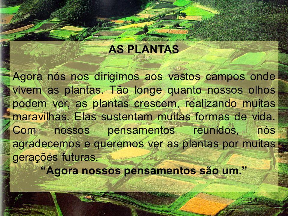 AS PLANTAS Agora nós nos dirigimos aos vastos campos onde vivem as plantas. Tão longe quanto nossos olhos podem ver, as plantas crescem, realizando mu