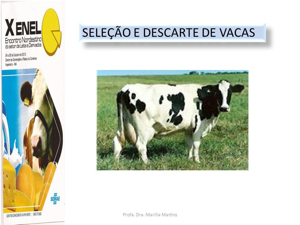 Profa.Dra. Marília Martins cljm@uol.com.br ABCDYZ EXPLOR.