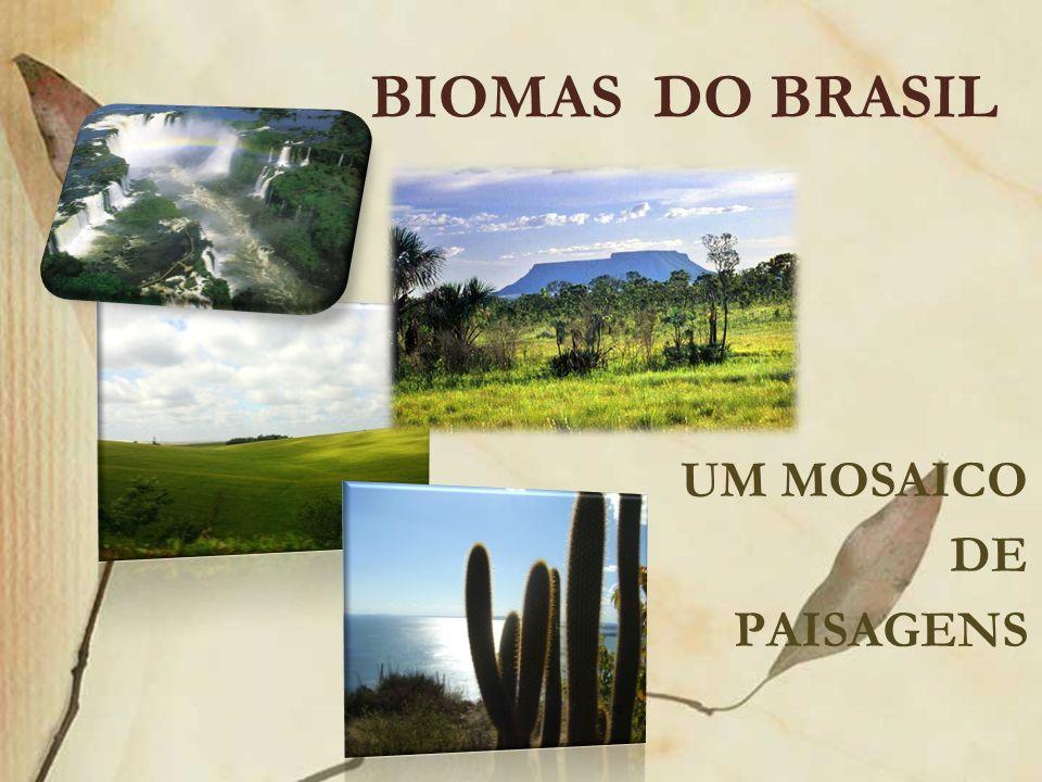BIOMAS DO BRASIL UM MOSAICO DE PAISAGENS