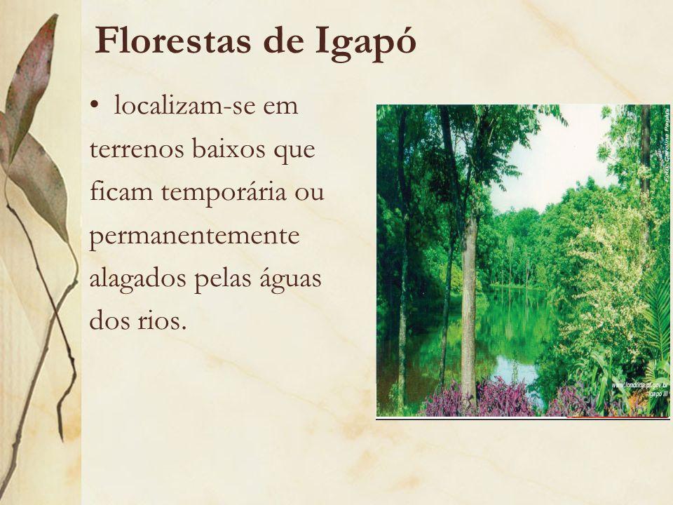 Florestas de Igapó localizam-se em terrenos baixos que ficam temporária ou permanentemente alagados pelas águas dos rios.