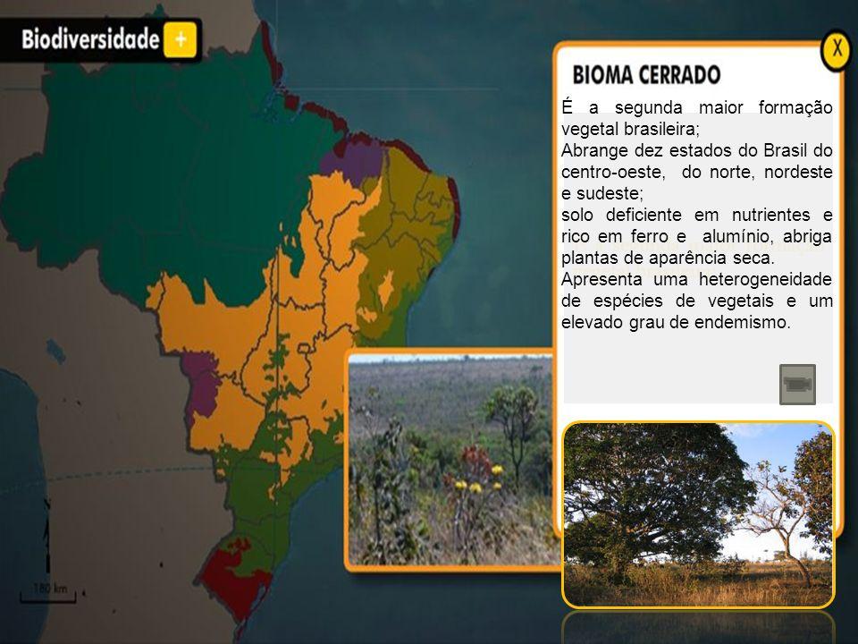 É a segunda maior formação vegetal brasileira; Abrange dez estados do Brasil do centro-oeste, do norte, nordeste e sudeste; solo deficiente em nutrien
