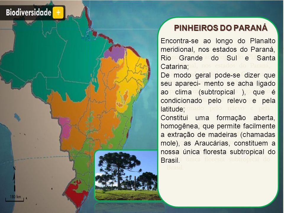 Encontra-se ao longo do Planalto meridional, nos estados do Paraná, Rio Grande do Sul e Santa Catarina; De modo geral pode-se dizer que seu apareci- m